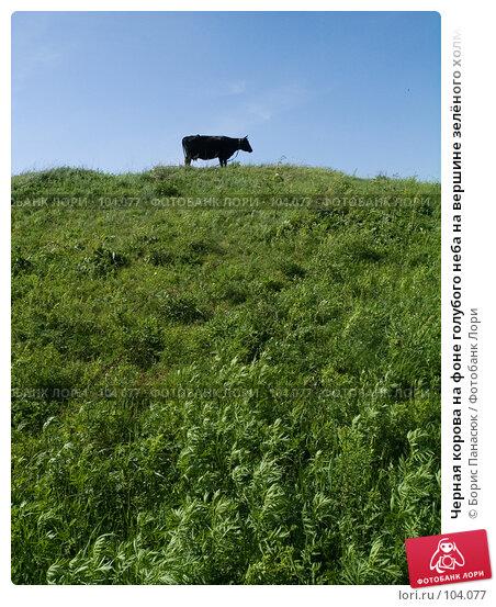 Черная корова на фоне голубого неба на вершине зелёного холма, фото № 104077, снято 11 декабря 2016 г. (c) Борис Панасюк / Фотобанк Лори