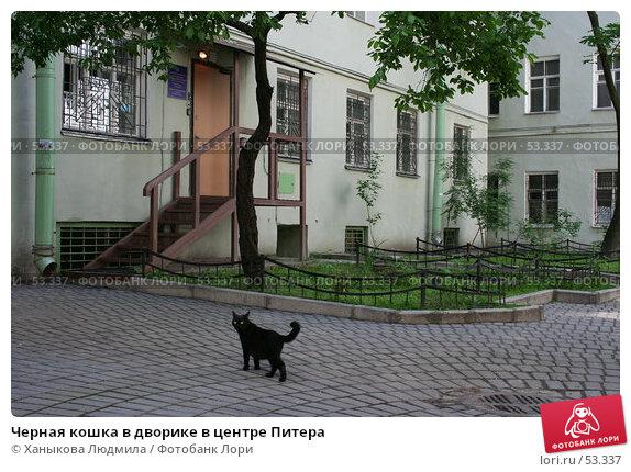 Черная кошка в дворике в центре Питера, фото № 53337, снято 14 июня 2007 г. (c) Ханыкова Людмила / Фотобанк Лори