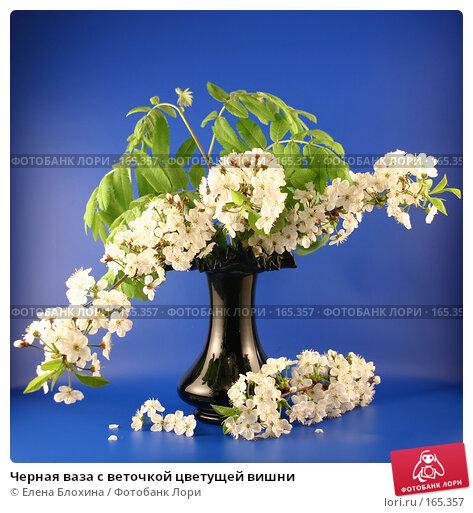 Черная ваза с веточкой цветущей вишни, фото № 165357, снято 13 мая 2007 г. (c) Елена Блохина / Фотобанк Лори