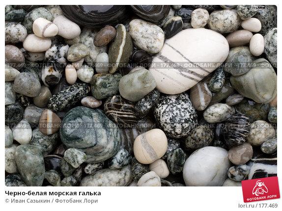 Черно-белая морская галька, фото № 177469, снято 9 ноября 2007 г. (c) Иван Сазыкин / Фотобанк Лори