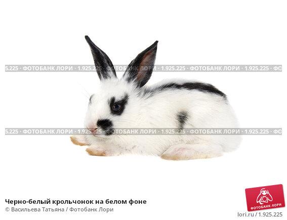 Купить «Черно-белый крольчонок на белом фоне», фото № 1925225, снято 6 августа 2010 г. (c) Васильева Татьяна / Фотобанк Лори