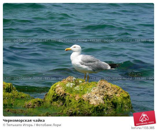 Черноморская чайка, фото № 133385, снято 22 июля 2007 г. (c) Тютькало Игорь / Фотобанк Лори