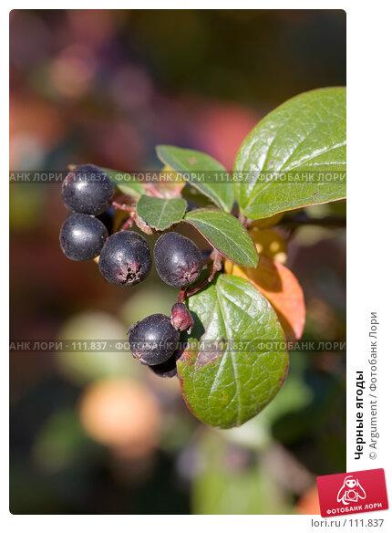 Черные ягоды, фото № 111837, снято 25 сентября 2007 г. (c) Argument / Фотобанк Лори