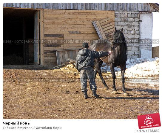 Купить «Черный конь», фото № 178869, снято 30 марта 2007 г. (c) Бяков Вячеслав / Фотобанк Лори