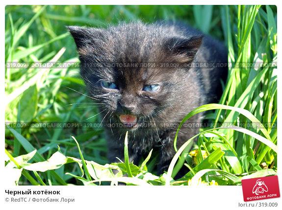 Черный котёнок, фото № 319009, снято 9 июня 2008 г. (c) RedTC / Фотобанк Лори