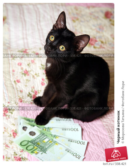 Черный котенок, фото № 338421, снято 9 апреля 2008 г. (c) Морозова Татьяна / Фотобанк Лори