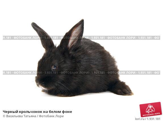 Купить «Черный крольчонок на белом фоне», фото № 1931181, снято 4 августа 2010 г. (c) Васильева Татьяна / Фотобанк Лори