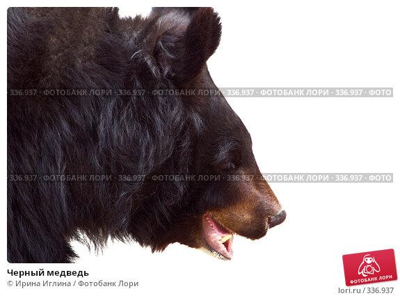 Купить «Черный медведь», фото № 336937, снято 21 июня 2008 г. (c) Ирина Иглина / Фотобанк Лори