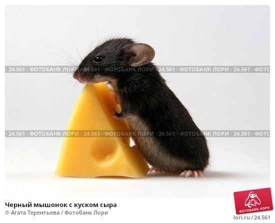 Купить «Черный мышонок с куском сыра», фото № 24561, снято 18 марта 2007 г. (c) Агата Терентьева / Фотобанк Лори