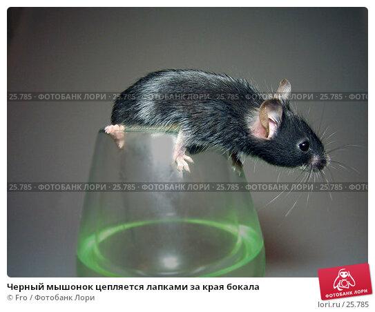 Черный мышонок цепляется лапками за края бокала, фото № 25785, снято 18 марта 2007 г. (c) Fro / Фотобанк Лори