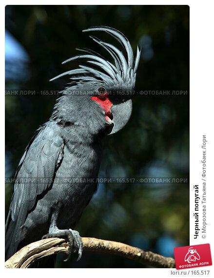 Черный попугай, фото № 165517, снято 23 октября 2007 г. (c) Морозова Татьяна / Фотобанк Лори