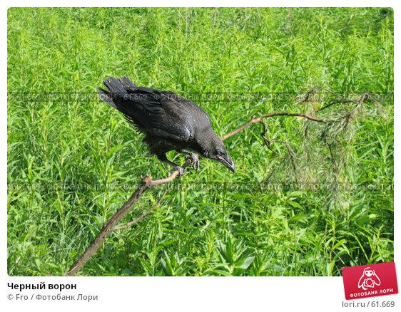 Купить «Черный ворон», фото № 61669, снято 4 июня 2005 г. (c) Fro / Фотобанк Лори