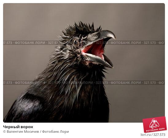 Черный ворон, фото № 327573, снято 27 октября 2007 г. (c) Валентин Мосичев / Фотобанк Лори