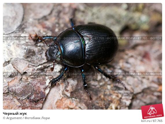 Черный жук, фото № 87765, снято 5 июля 2007 г. (c) Argument / Фотобанк Лори
