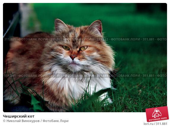 Чеширский кот, эксклюзивное фото № 311881, снято 2 мая 2008 г. (c) Николай Винокуров / Фотобанк Лори
