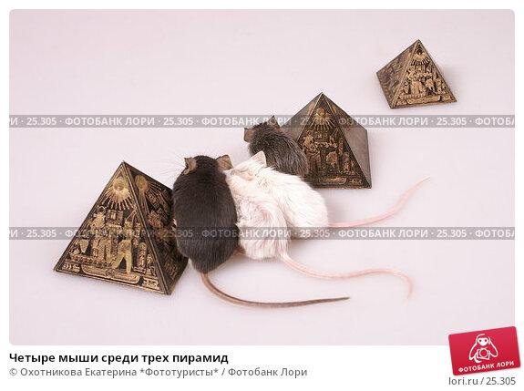 Купить «Четыре мыши среди трех пирамид», эксклюзивное фото № 25305, снято 18 марта 2007 г. (c) Охотникова Екатерина *Фототуристы* / Фотобанк Лори