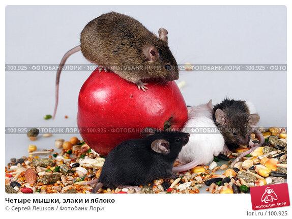 Четыре мышки, злаки и яблоко, фото № 100925, снято 23 сентября 2007 г. (c) Сергей Лешков / Фотобанк Лори