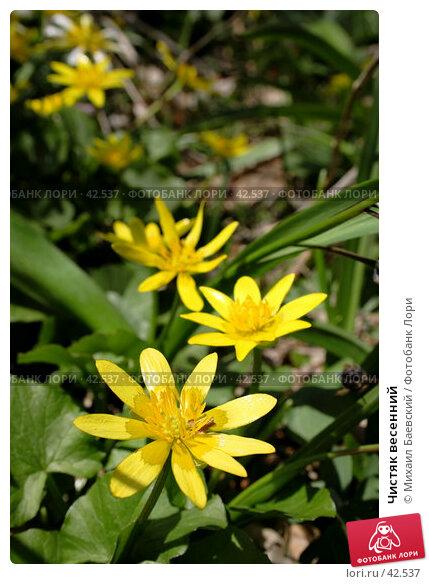 Чистяк весенний, фото № 42537, снято 5 мая 2007 г. (c) Михаил Баевский / Фотобанк Лори