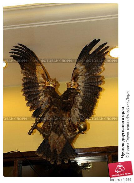 Чучело двуглавого орла, эксклюзивное фото № 1989, снято 28 мая 2005 г. (c) Ирина Терентьева / Фотобанк Лори