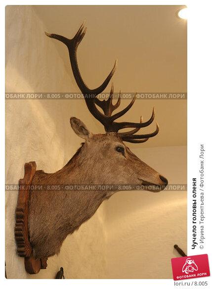 Чучело головы оленя, эксклюзивное фото № 8005, снято 21 июля 2006 г. (c) Ирина Терентьева / Фотобанк Лори