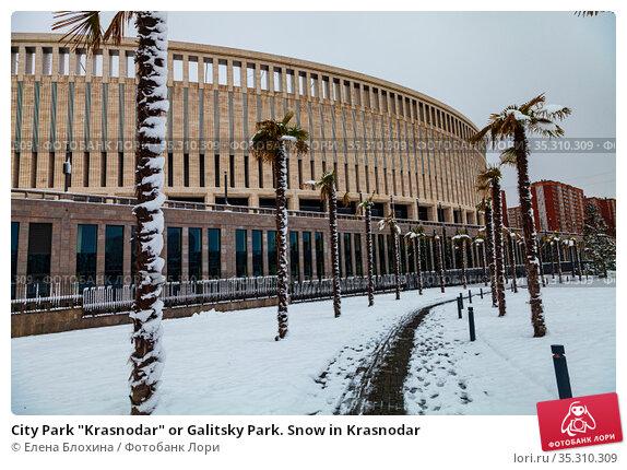 "City Park ""Krasnodar"" or Galitsky Park. Snow in Krasnodar. Редакционное фото, фотограф Елена Блохина / Фотобанк Лори"