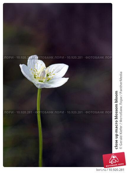 Купить «close up macro blossom bloom», фото № 10920281, снято 13 ноября 2018 г. (c) PantherMedia / Фотобанк Лори