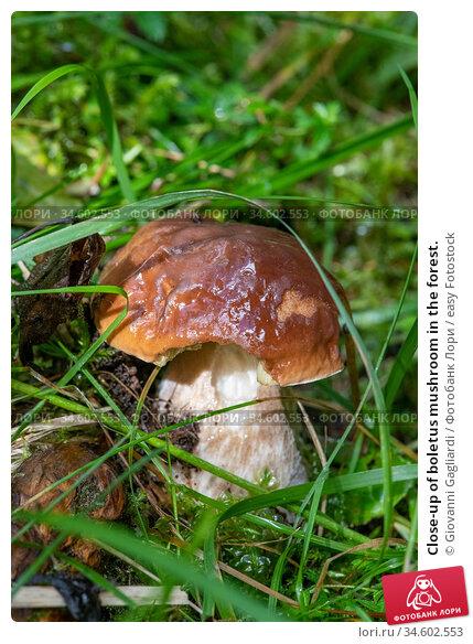 Close-up of boletus mushroom in the forest. Стоковое фото, фотограф Giovanni Gagliardi / easy Fotostock / Фотобанк Лори