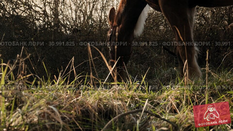 Close up view of horse's face eating the green grass in the lawn slow motion. Стоковое видео, видеограф Denis Mishchenko / Фотобанк Лори
