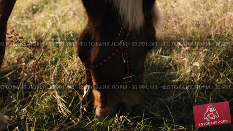 Close up view of horse's head eating the drass in the early morning slow motion. Стоковое видео, видеограф Denis Mishchenko / Фотобанк Лори