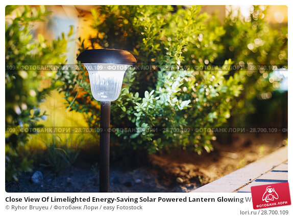 Купить «Close View Of Limelighted Energy-Saving Solar Powered Lantern Glowing White Light In The Garden. Backlighted Garden Plants Background.», фото № 28700109, снято 1 июня 2016 г. (c) easy Fotostock / Фотобанк Лори