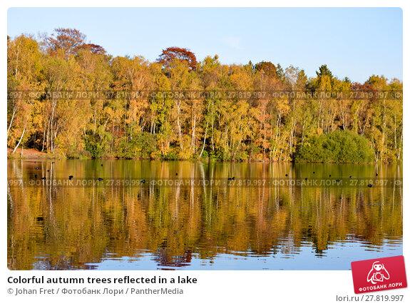 Купить «Colorful autumn trees reflected in a lake», фото № 27819997, снято 22 февраля 2018 г. (c) PantherMedia / Фотобанк Лори