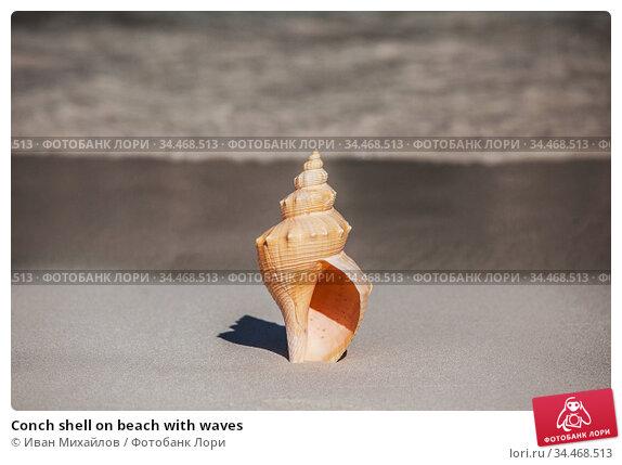 Conch shell on beach with waves. Стоковое фото, фотограф Иван Михайлов / Фотобанк Лори
