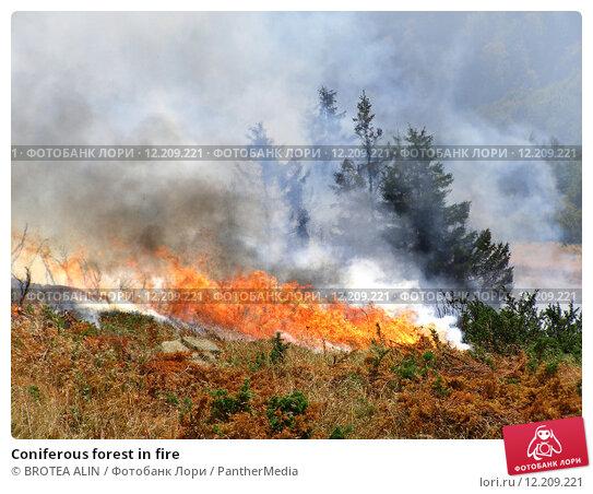 Купить «Coniferous forest in fire», фото № 12209221, снято 21 февраля 2019 г. (c) PantherMedia / Фотобанк Лори