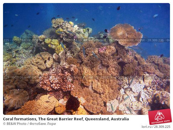 Купить «Coral formations, The Great Barrier Reef, Queensland, Australia», фото № 28309225, снято 21 апреля 2019 г. (c) BE&W Photo / Фотобанк Лори