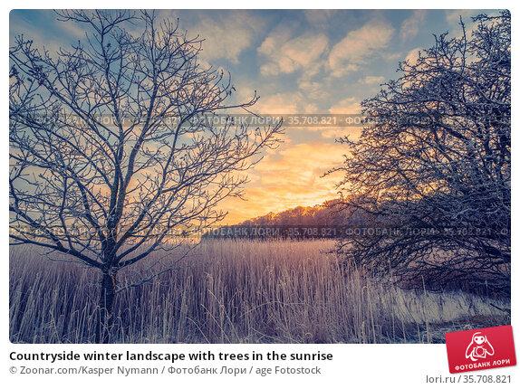 Countryside winter landscape with trees in the sunrise. Стоковое фото, фотограф Zoonar.com/Kasper Nymann / age Fotostock / Фотобанк Лори