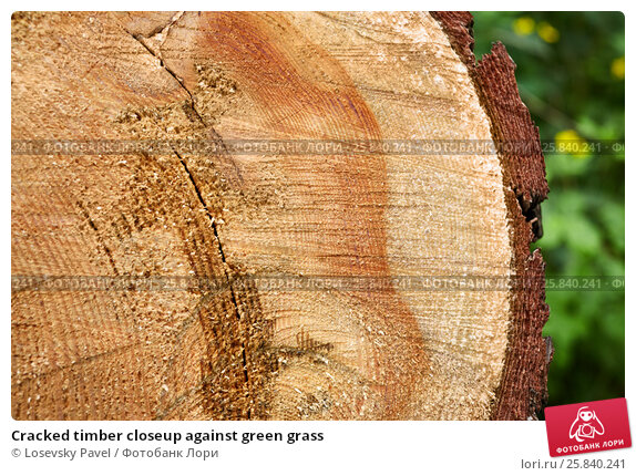 Купить «Cracked timber closeup against green grass», фото № 25840241, снято 31 мая 2015 г. (c) Losevsky Pavel / Фотобанк Лори