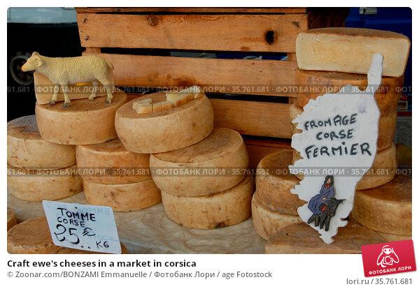 Craft ewe's cheeses in a market in corsica. Стоковое фото, фотограф Zoonar.com/BONZAMI Emmanuelle / age Fotostock / Фотобанк Лори