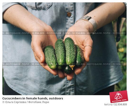 Купить «Cucucmbers in female hands, outdoors», фото № 32934809, снято 13 июля 2019 г. (c) Ольга Сергеева / Фотобанк Лори