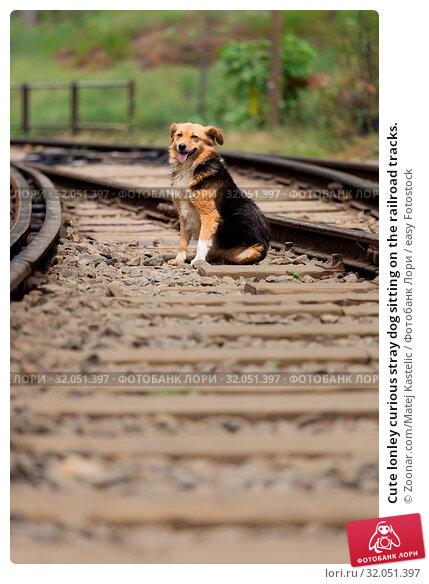 Cute lonley curious stray dog sitting on the railroad tracks. Стоковое фото, фотограф Zoonar.com/Matej Kastelic / easy Fotostock / Фотобанк Лори