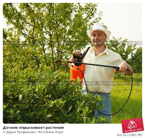 Купить «Дачник опрыскивает растения», фото № 2861781, снято 25 июля 2010 г. (c) Дарья Филимонова / Фотобанк Лори