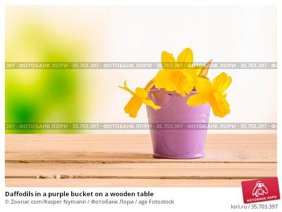 Daffodils in a purple bucket on a wooden table. Стоковое фото, фотограф Zoonar.com/Kasper Nymann / age Fotostock / Фотобанк Лори