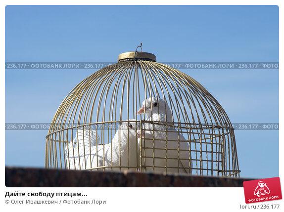 Купить «Дайте свободу птицам...», фото № 236177, снято 29 марта 2008 г. (c) Олег Ивашкевич / Фотобанк Лори