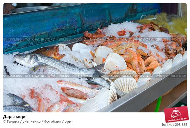 Купить «Дары моря», фото № 298885, снято 3 мая 2008 г. (c) Галина Лукьяненко / Фотобанк Лори