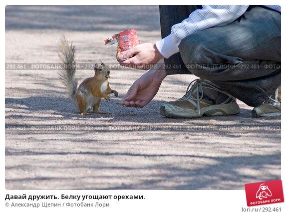Купить «Давай дружить. Белку угощают орехами.», эксклюзивное фото № 292461, снято 16 мая 2008 г. (c) Александр Щепин / Фотобанк Лори