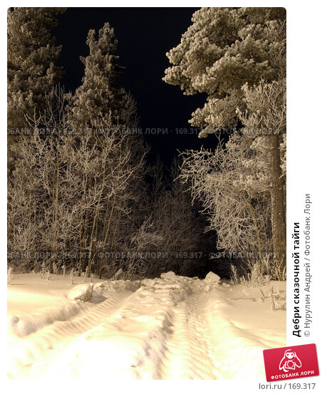 Дебри сказочной тайги, фото № 169317, снято 8 января 2008 г. (c) Нурулин Андрей / Фотобанк Лори