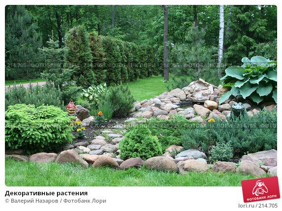 Декоративные растения, фото № 214705, снято 8 июня 2006 г. (c) Валерий Назаров / Фотобанк Лори