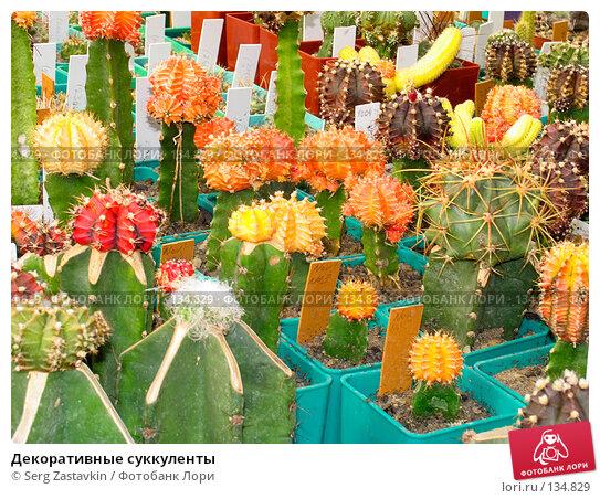 Купить «Декоративные суккуленты», фото № 134829, снято 3 марта 2005 г. (c) Serg Zastavkin / Фотобанк Лори