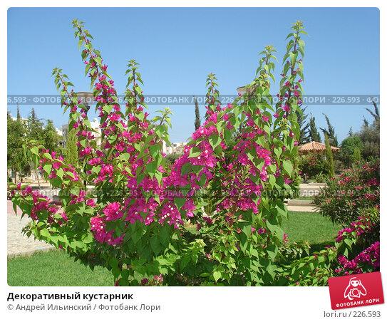 Купить «Декоративный кустарник», фото № 226593, снято 13 июля 2007 г. (c) Андрей Ильинский / Фотобанк Лори
