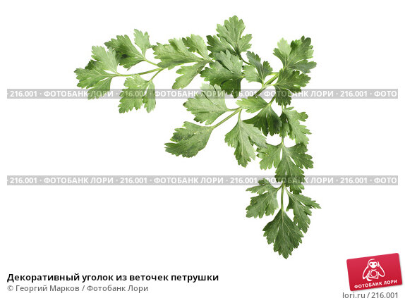 Декоративный уголок из веточек петрушки, фото № 216001, снято 29 января 2008 г. (c) Георгий Марков / Фотобанк Лори