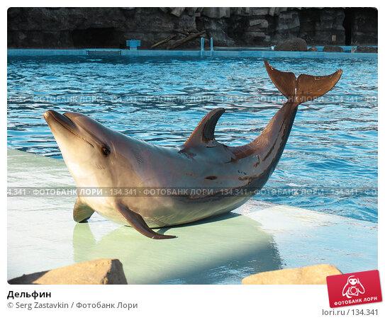 Дельфин, фото № 134341, снято 4 апреля 2007 г. (c) Serg Zastavkin / Фотобанк Лори